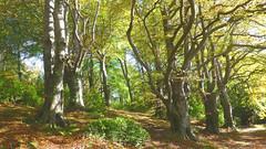 Castlewellan, County Down, Northern Ireland (east med wanderer) Tags: northernireland uk castlewellanforestpark countydown ulster ireland