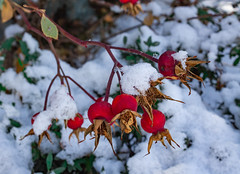 EmilyMunoz_theworldincolour_01 (littleemphoto) Tags: fall2018 idaho rexburg snow