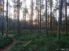 Tohloppi (PeepeT) Tags: metsä syksy autumn tampere tohloppi luontokuvaus naturephotography marraskuu november