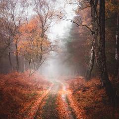 Terlet (Pieter Ott) Tags: herfst autumn woods forest moody sfeer mist veluwezoom veluwe landschap landscape terlet