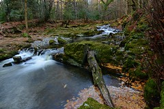 Tollymore forest. (carolinejohnston2) Tags: river waterfall rock woods woodland autumn leaves trees branch moss flow ireland codown outdoors landscape wild longexposure fall