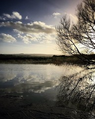 Always time for reflection (jonmacephotography) Tags: landscape branches tree flooding river reflections water