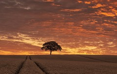 A Distant Memory (Captain Nikon) Tags: rural sunrise spectacular england lonetree crops leadinglines silhouette dawn nikonphotography landscapephotography