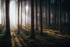 The Shining (der_peste (on/off)) Tags: forest woods trees raysoflight rays raysofgod godrays lightrays sun sunlight shadow light fall autumn backlight mood