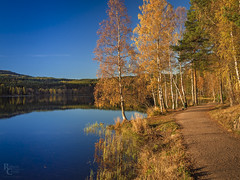 Sognsvann in Autumn (RobertCross1 (off and on)) Tags: 20mmf17panasonic em5 europe nordmarka norge norway omd olympus oslo scandinavia sognsvann autumn birch bluesky fall foliage forest hiking lake landscape leaves nature pine pond reflection trail trees water