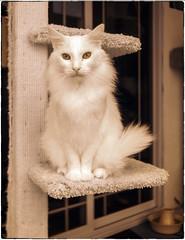 White Cat (NoJuan) Tags: infrared infraredconversion digitalinfrared micro43infrared ep5 olympusep5 17mm olympus17mmf18 olympusmzuikodigital17mmf18 microfourthirds micro43 mirrorless cat whitecat