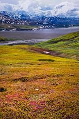 Denali Range (chittalr) Tags: denalinationalpark denali nationalpark mountain snow landscape nikon nikond750 d750 glacier alaska