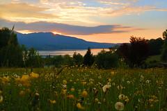 abendliche Blumenwiese am Tegernsee HDR 4721 (rg-foto1) Tags: bayern oberbayern tegernsee see sonnenuntergang farbig farbenfroh wiese berge