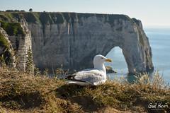 20180707 - Etretat-3818 (GaelHervePhoto) Tags: etretat normandie falaise cliff calcaire sea mer manche seinemaritime arche