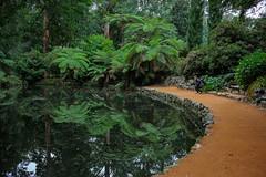 IMG_9865 (sarnovphoto) Tags: dandenong dandenongranges olinda victoria rainforest australia canon canon60d bridge lake water