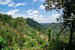 The beautiful landscape at Kieni (Coffee Collective) Tags: kenya kieni coffee directtrade nyeri thecoffeecollective