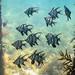 Flinders Pier Underwater-19