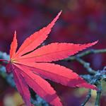 UK - Gloucestershire - Westonbirt Arboretum thumbnail
