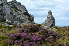 Stiperstones, Shropshire (Seventh Heaven Photography *) Tags: stiperstones shropshire nikon d3200 heather erica wid countryside nature landscape rocks rock hill sky blue manstone