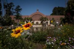 San Diego-18 (Balboa Park) (LTL78) Tags: botanicalgarden balboapark sandiego ca usa 2018 fujifilm x100t parque jardín