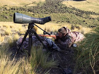 New Zealand Trophy Red Stag Hunting - Kaikoura 22