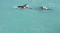 Dauphin Dolphin Mother & baby (Puce d'eau) Tags: dauphin bb baby bébé juvenile dolphin cétacé mammifères tulum chiankaan mexique quintana roo yucatan canon eos 7d 150600 tamron