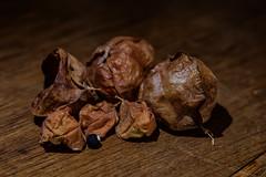 Ballonrebe Früchte (blasjaz) Tags: blasjaz botanik frucht früchte pflanze plant fruit heilpflanze