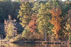 The light at Sunset. (Sam0hsong) Tags: veteransday lakecrabtree autumnleaves northcarolina