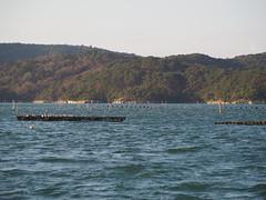 PB114566 (senngokujidai4434) Tags: 日本三景 島 island 松島 matsushima 宮城 miyagi japan japanese