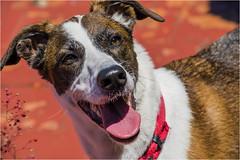_LMV3623 (Lucio_Vecchio) Tags: delta nikond5500 nikon nikkor mascota retrato friend amigos perros animales naturaleza
