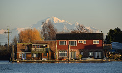 View of Mt. Baker in Washington (SonjaPetersonPh♡tography) Tags: delta ladner bc britishcolumbia canada nikon nikond5300 mtbaker view mountain landscape mountainlandscape riverfront river waterfront waterscape water mount baker mountainpeak scenic scenery juandefucastrait mountbaker