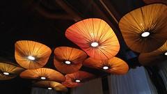 Under the Big Mushroom Tops [20180914_174617] (trekkyandy) Tags: noithaicuisine noi thai thaifood bendoregon downtownbend oregon mushrooms lighting dining dinner