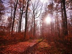 P1060866 (mireiatarres) Tags: herbst bosque wood autumn forest hojas trees arboles