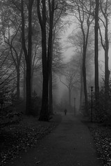 The Way (Velby) Tags: velbert schwarzweis blackwhite tree forest wald bäume nebel 200d bw blackandwhite landscape nature