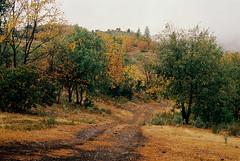A road over the hill (bingley0522) Tags: nikkormatft3 nikkor50mmf18 ektar100 murphys calaverascounty querencia sierrafoothills rainy thanksgivingweekend autaut