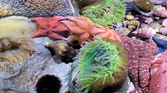 20180920_163718 (bryandkeith) Tags: unitedstates aquariumofthepacific longbeach
