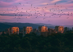 (Coughh_Syrup) Tags: buildings soviet brutalism sky birds sunset outdoors nature trees clouds pink sunrise sun city urban architecture windows reflections