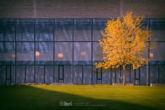 Forth Fog - 01 Nov 2018 - 91-Edit.jpg (ibriphotos) Tags: sunshine autumn blue wallacemonument river forthvalleycollege mist stirling riverforth fog weather