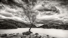 Lone Tree Wales (petebristo) Tags: snowdonia wales lonetree waterscape lakes
