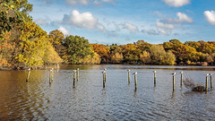 A perch for all (PhredKH) Tags: canonphotography connaughtwater eppingforest essex forest fredkh photosbyphredkh phredkh splendid lake nature scencwater water scenic wood sky clouds ducks bushes 2470mm ef2470mmf4lisusm canoneos5dmarkiii naturephotography tree