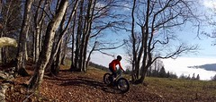 Easy Loop (29in.CH) Tags: fall autumn fatbike ride 15112018 trees blue sky fog