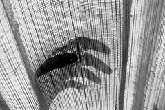 la préhension (asketoner) Tags: hand shadow daylight curtain side through window angst fingers fear