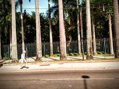 te encontro lá (lucia yunes) Tags: streetphoto streetshot streetphotographie streetscene streetlife walk mobilephotographie mobilephoto cenaderua fotografiaderua fotoderua luciayunes men lifestyle lifeinstreet riodejaneiro jardimbotânicodoriodejaneiro motoz3play