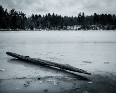 Log on Walden Pond (nsandin88) Tags: z7 walden nikon historic bandw exploration overcast monotone cold thoreau statepark snow froxen history blackandwhite park frozen explore rustic ice concord massachusetts unitedstatesofamerica us