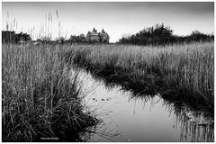 l'hiver dans les marais de Suscinio (pileath) Tags: bw bretagne france suscinio morbihan marais winter hiver noir et blanc