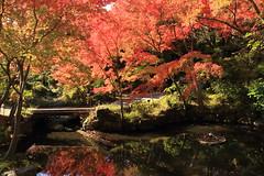 Autumn in Japan (yukky89_yamashita) Tags: アサヒビール大山崎山荘美術館 京都 大山崎町 紅葉 庭園 garden museum kyoto japan oyamazaki autumn leaves red vivid