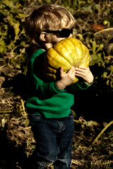 I'll Take this One 1 (LongInt57) Tags: boy child children person people pumpkin carrying farm agriculture field yellow orange brown green blonde blue black belleville illinois usa autumn fall