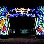 Espèces en voie d'illumination - premier festival des lumières du Jardin des Plantes à Paris thumbnail