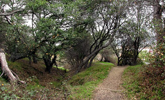 Albany Hill (TJ Gehling) Tags: albanyhill trail albanyca