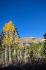 Autumn in the Sierras