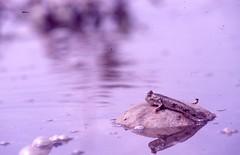 1994.05.21布袋 (柯金源) Tags: 柯金源 牡蠣