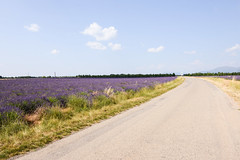 DSC_9595-12-17 (aehnattapol) Tags: france lavender building shop landscape uk england europe eifel farm blue sky green