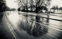 mirroring in the rainy street - trees (MLe Dortmund) Tags: baum tree licht schatten monochrome blackandwhite schwarzweis street strase backlit dortmund mr mirror spiegelung lumen path caminhos