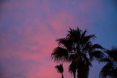 DSC_2288 (Alex Cernichiari) Tags: lasvegas las vegas night nikon nikonz6 fremont fremontstreet neon nightphotography