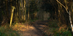 Give me a sign (Adin Roberts) Tags: woodland trees sign footpath cowfold sussex